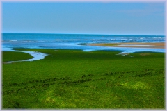 playa-de-algas