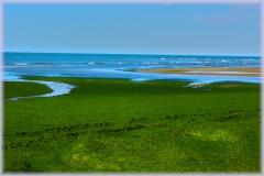 playa-de-algas_0