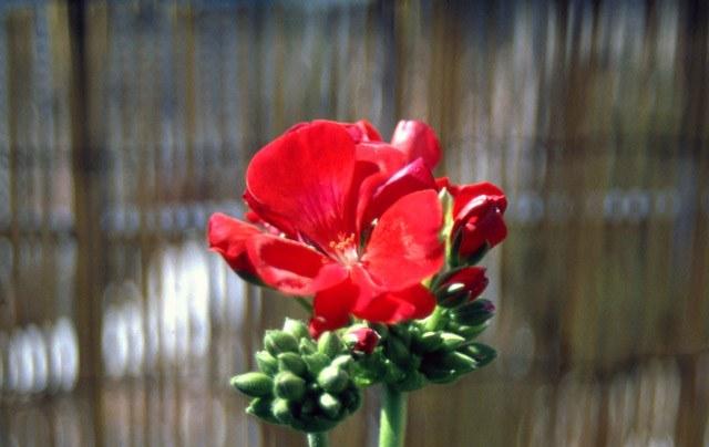 flor-6