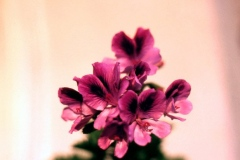 flor-5