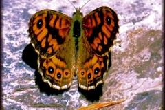 mariposa_0